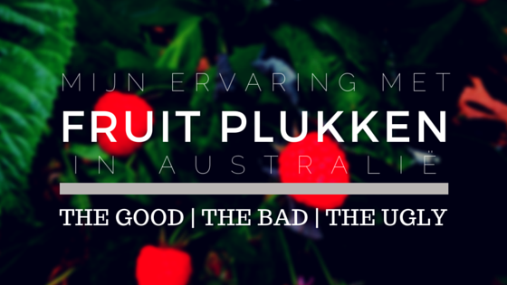 Mijn Ervaring Met Fruit Plukken In Australië: The Good, The Bad, The Ugly