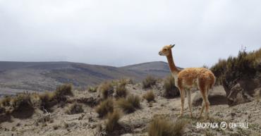 Hoogtepunten Ecuador: 13 toffe dingen die je écht niet wilt missen.